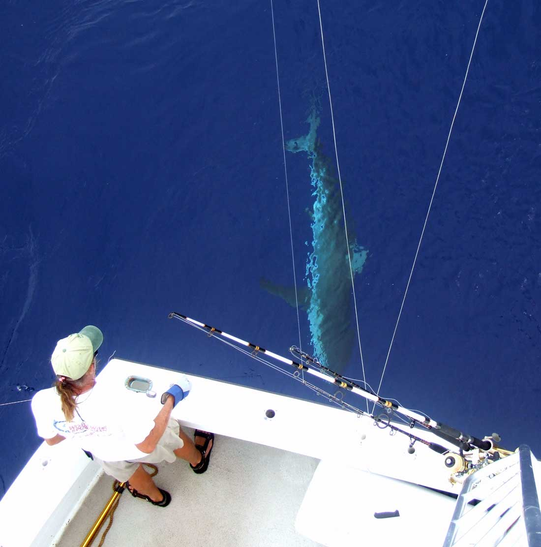 Shark fishing with florida keys fishing restless too for Shark fishing games